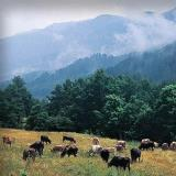 Grammos - the area constitutes one of the most productive virgin forest complexes in Greece