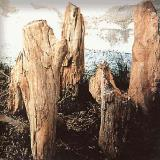 Nostimo fossilized forest - the fossilized forest that has been discovered in the area is 20.000.000 yrs old
