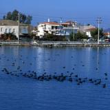 Etoliko lagoon with residing birds