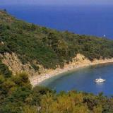 Skopelos, sandy cove in the entrance of a pine-clad hill